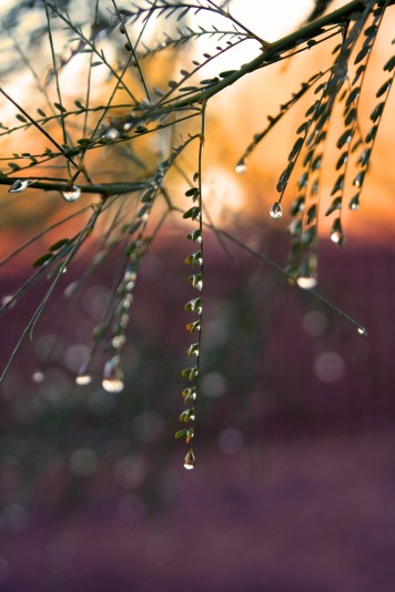 edited leaves droplet 2